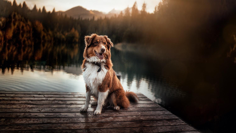 Einzelshooting mit Hund Carino in Graubünden