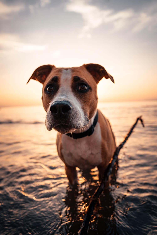 Foto-Shooting Fotografie Vorarlberg Bodensee Hund Terrier